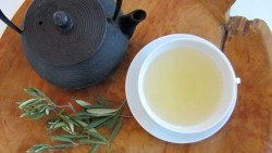 Olive Leaf Tea - organic! Directly from Provence, best quality!