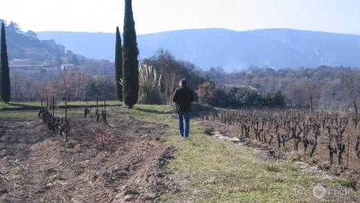 Wanderung durch die Weinberge von La Canorgue, Bonnieux, Provence