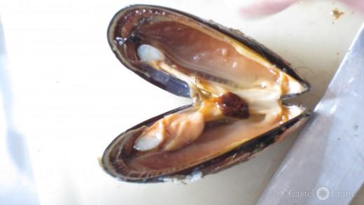 geöffnete Muschel im Cours de Cuisine
