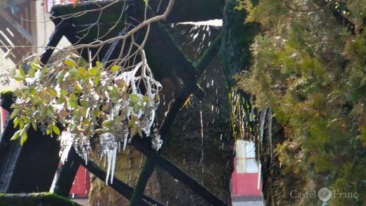 vereister Baum in L'Isle-sur-Sorgue, Foto: Jörgen Kipp pour Castel Franc