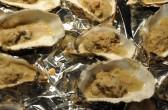 gratinierte Austern in Castel Franc