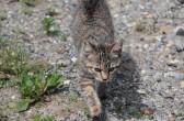 Katze auf der Jagd, Castel Franc Provence, Velleron